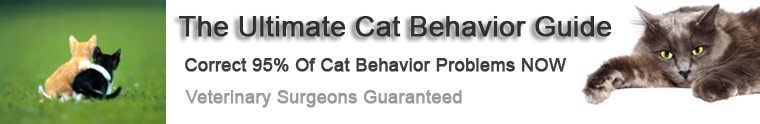 Cat Behavior site header image of kittten and adult cat