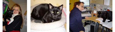 Pictures of Sarah, Paul and Merlin at Purrfect Cat Behavior